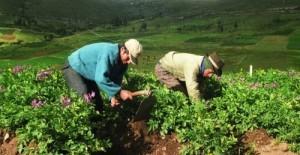 trabajadoragricola-ecuadortimes-ecuadornews