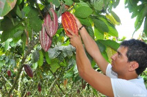 cacao-ecuadortimes-ecuadornews