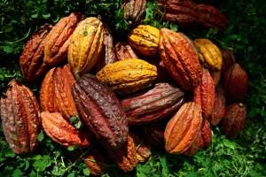 cacaoecuatorianopremiadoFrancia-Ecuadortimes-Ecuadornews