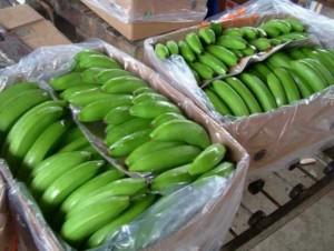 bananeros-ecuadortimes-ecuadornews