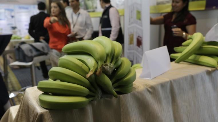 banano-ecuatprianao-ecuadortimes