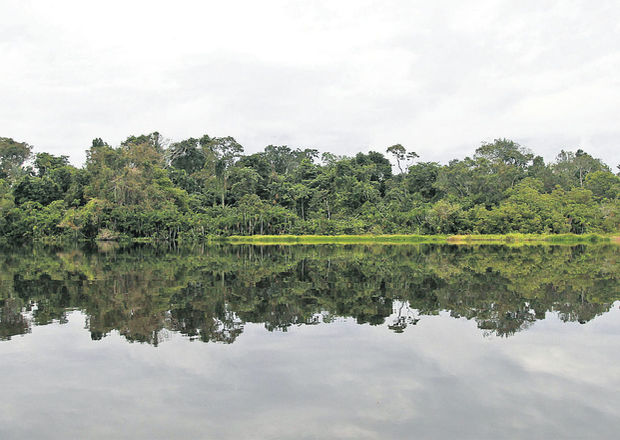 1% of the Yasuni National Park will have its oil extracted.