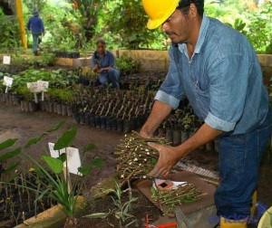 gobierno- reforestacion