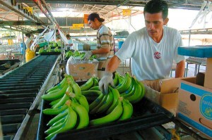 venta_banano_ecuador