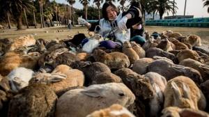 conejos-isla