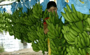 Crisis in the banana sector.