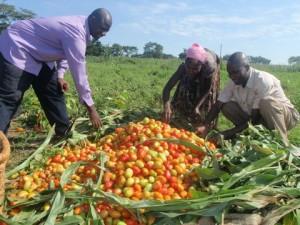 ugandanfarmers-ecuadortimes-ecuadornews