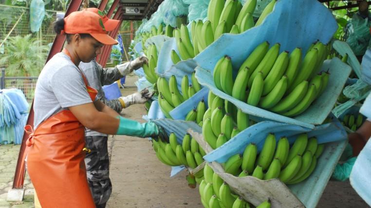 exportaciones-ecuadortimes