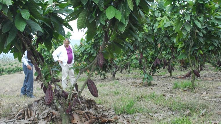 cacao-ecuaodrtimes